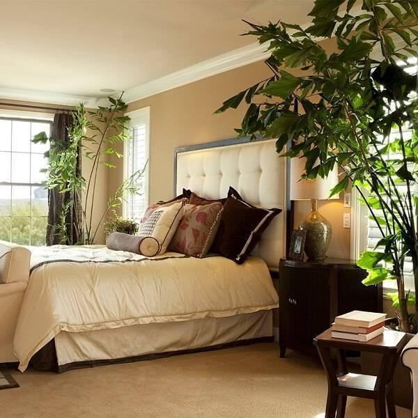 Plantas para quarto de casal que melhoram a qualidade do sono