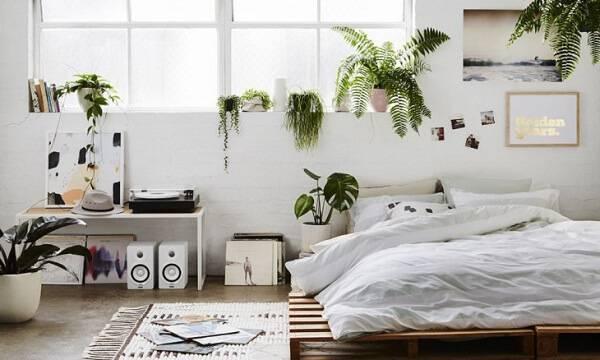 Invista em plantas para quarto e melhore a qualidade do seu sono