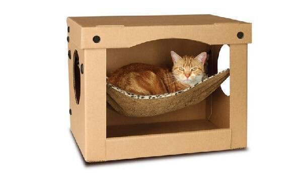 Todo gato adora uma caixinha de papelão