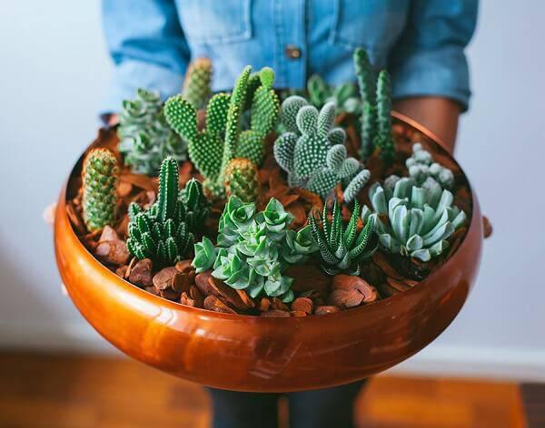 Forme um lindo vaso com cactos e suculentas