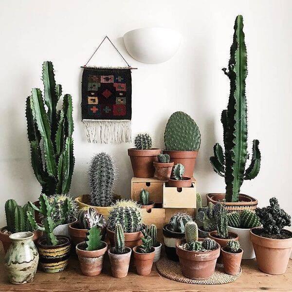 Separe inúmeros vasos de cerâmica e cultive diferentes tipos de cactos em casa