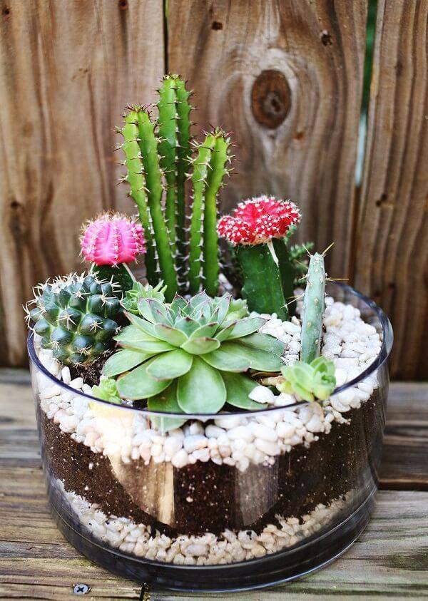 Cultive em um único vaso diferentes tipos de cactos e suculentas