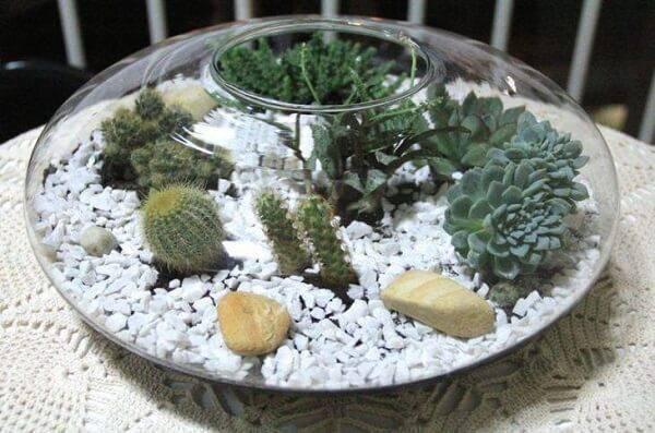 Vasos charmosos para cultivar diferentes tipos de cactos pequenos