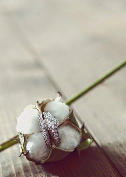 bodas de algodão - flor de algodão com aliança