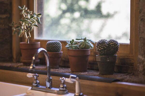 Aproveite o cantinho da janela para cultivar diferentes tipos de cactos e suculentas