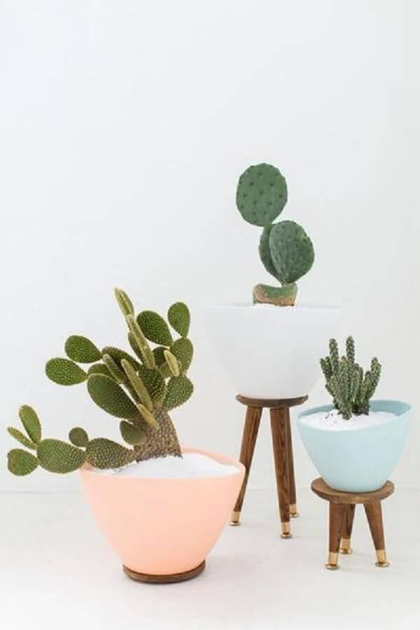 Utilize vasos coloridos para cultivar diferentes tipos de cactos