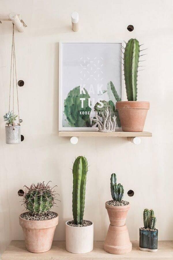 Decore o cômodo com diferentes tipos de cacto