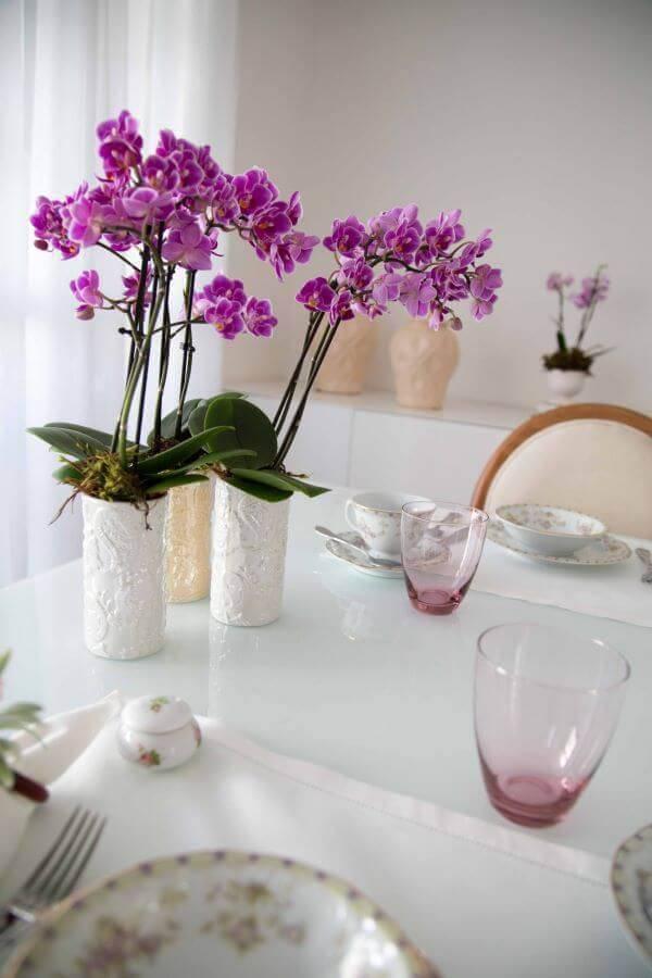 Mini orquídeas raras para usar na decoração