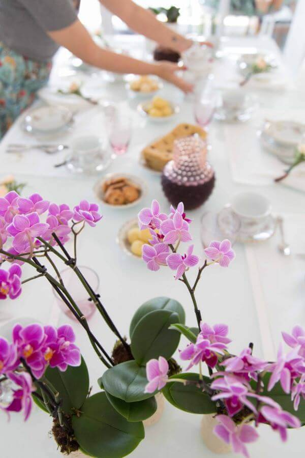 Mini orquídeas raras