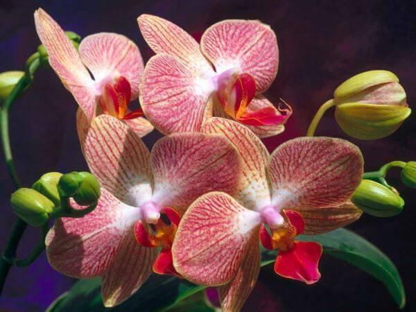 Orquídeas raras em tons de vermelho