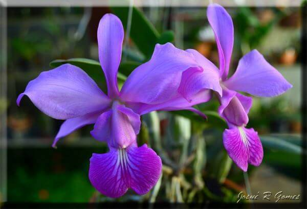 Orquídeas com formatos diferentes