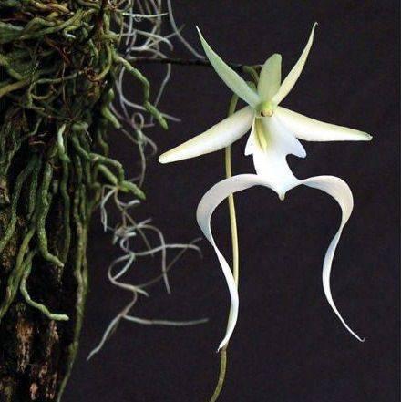 Orquídeas espécies raras