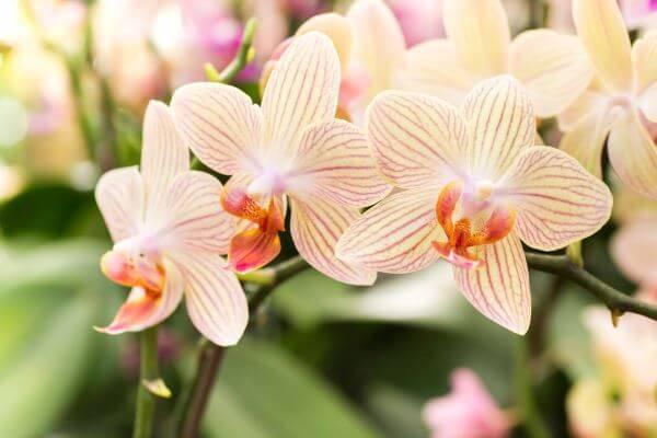 Orquídeas raras com cores diferentes