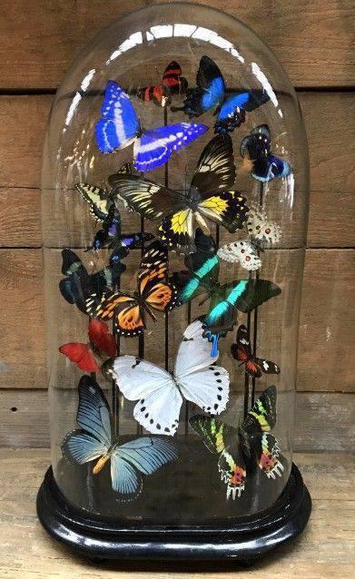 redoma - redoma com borboletas coloridas