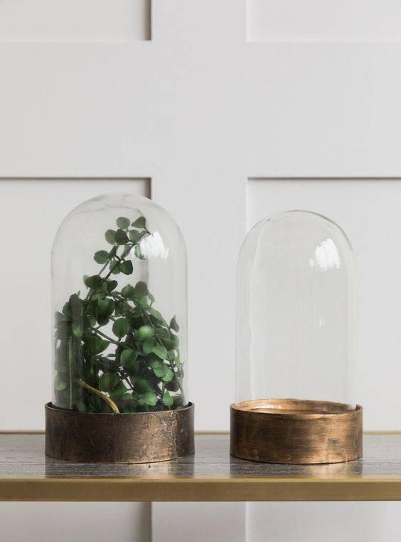 redoma - redomas com plantas