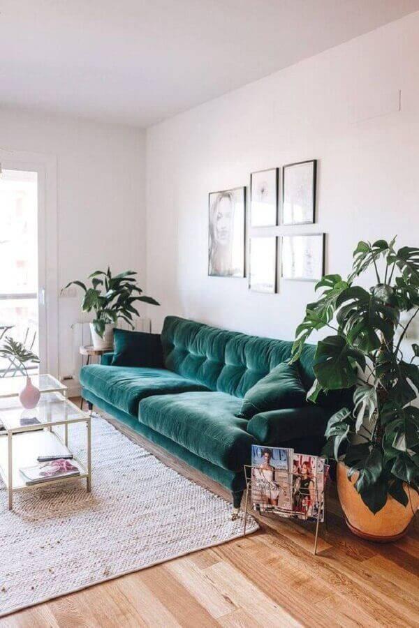 sala simples decorada com sofá verde e vasos de plantas Foto Ten is Extreme Shop