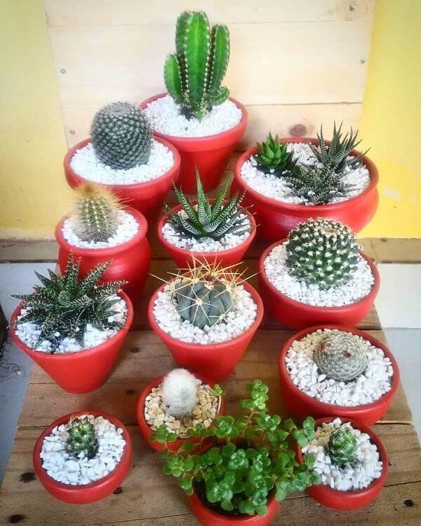 Invista em diferentes tipos de cactos para decorar a casa