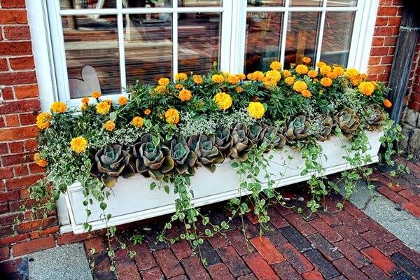 Mescle diferentes plantas na sua floreira