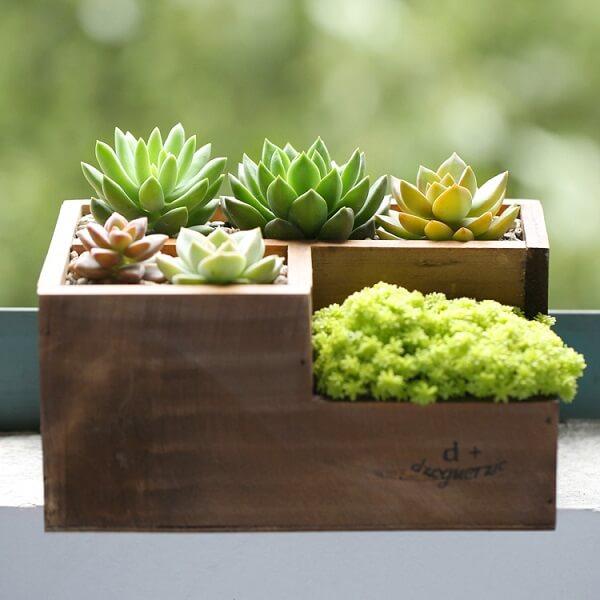 Modelo de mini floreira com suculentas