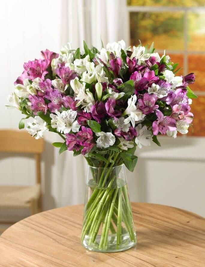 Astromélia lilás e branca