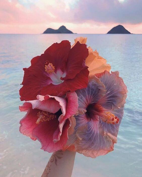 Buquê de hibisco nas cores vermelhas e rosa
