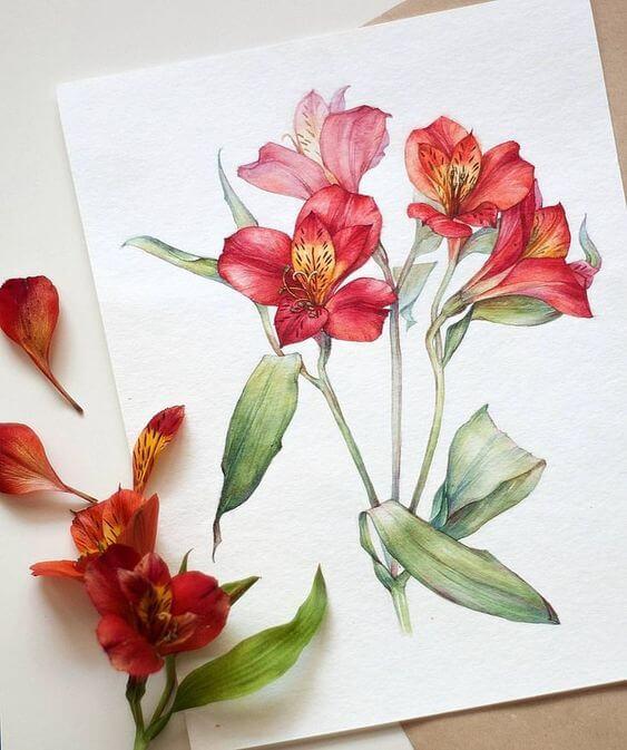 Flor astromelia vermelha