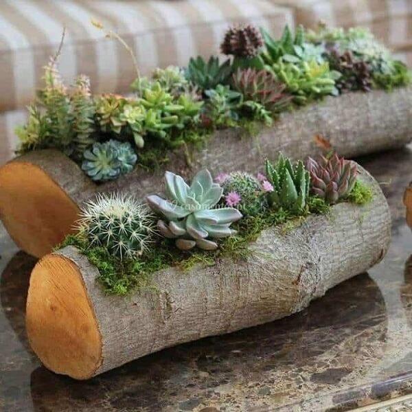 Floreira feita com pedaço de tronco serve de abrigo para suculentas