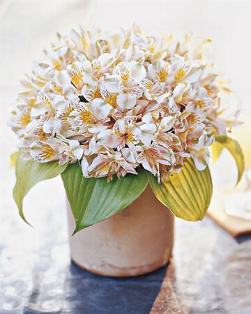 Flores astromelia