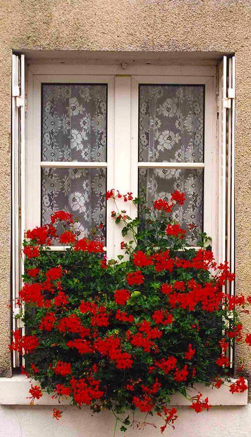 Flores vermelhas na janela