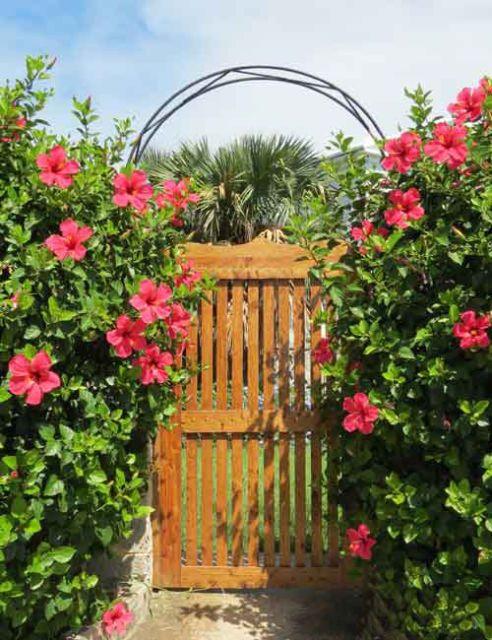 Flores de hibisco no jardim de casa