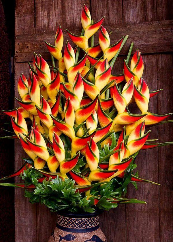 Planta helicônia no vaso