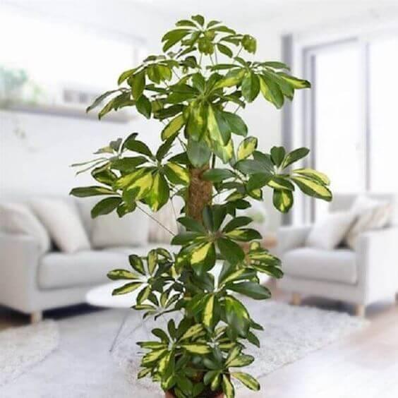 Plantas de sombra para sala de estar