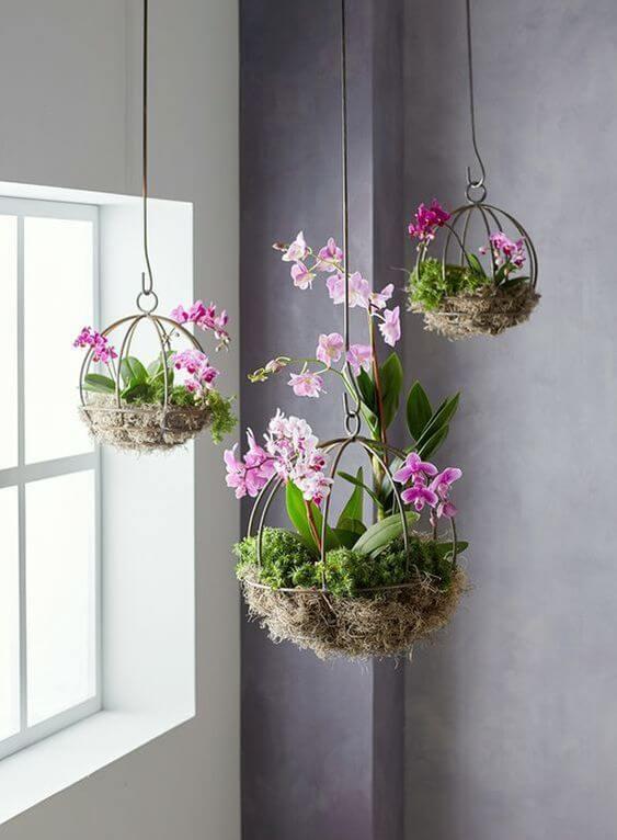 Plantas de sombra com flores suspensa