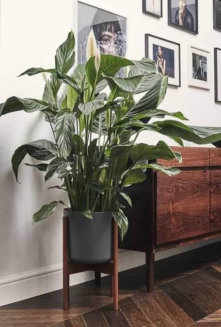 Plantas de sombra com flores