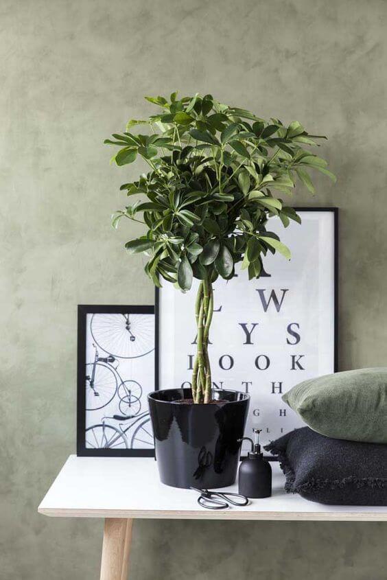 Plantas de sombra para decoração moderna