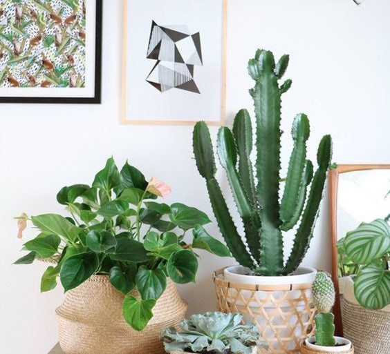 plantas-de-sombra-para-casa-com-cactos-foto-followthecolours