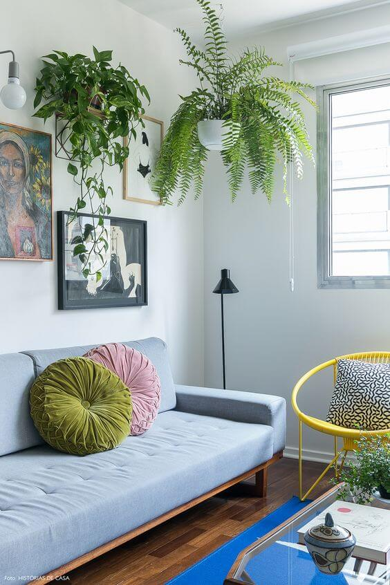 Plantas de sombra para casa suspenso