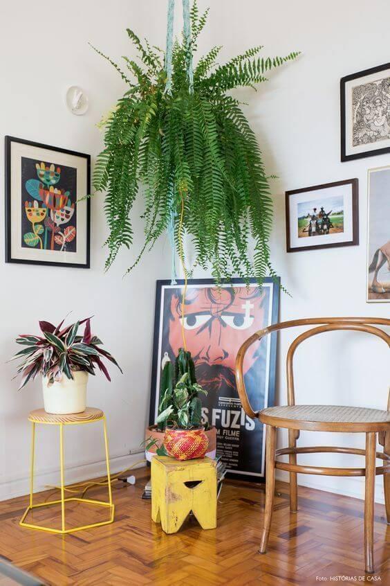 plantas de sombra para decorar sua sala de estar