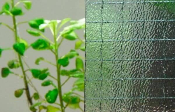 Tipos de vidro aramado para decorar casa