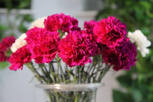 Flores vermelhas cravo