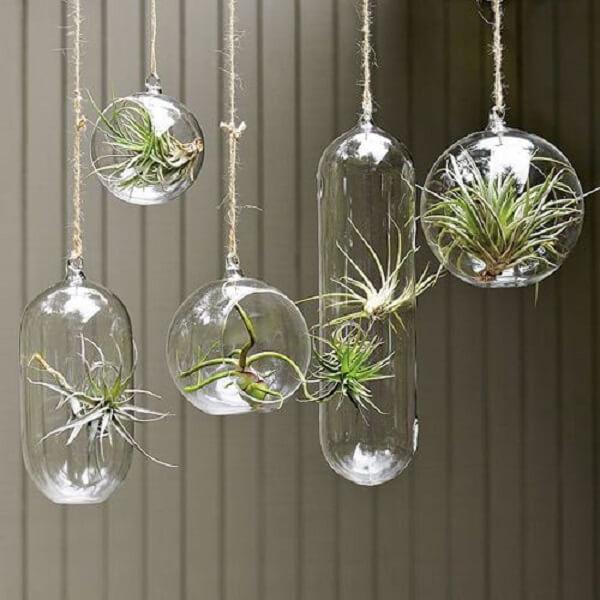 Diferentes formatos de cachepot de vidro