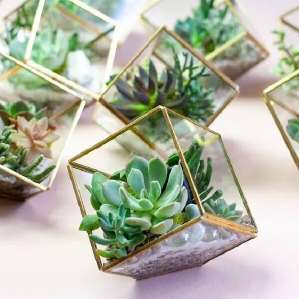 Recipiente de vidro em formato de cubo para cultivo de suculentas