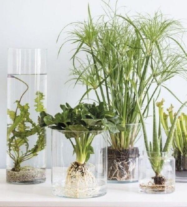 No recipiente de vidro as raízes ficam aparentes e trazem um toque natural ao ambiente