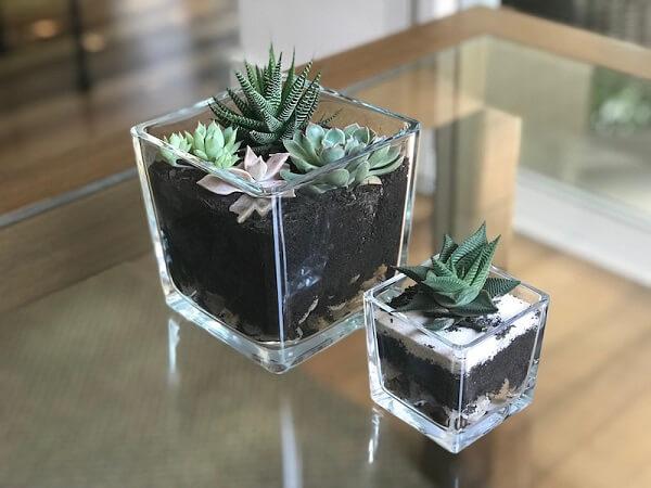 Suculentas e cactos podem ser cultivados dentro do cachepot de vidro quadrado