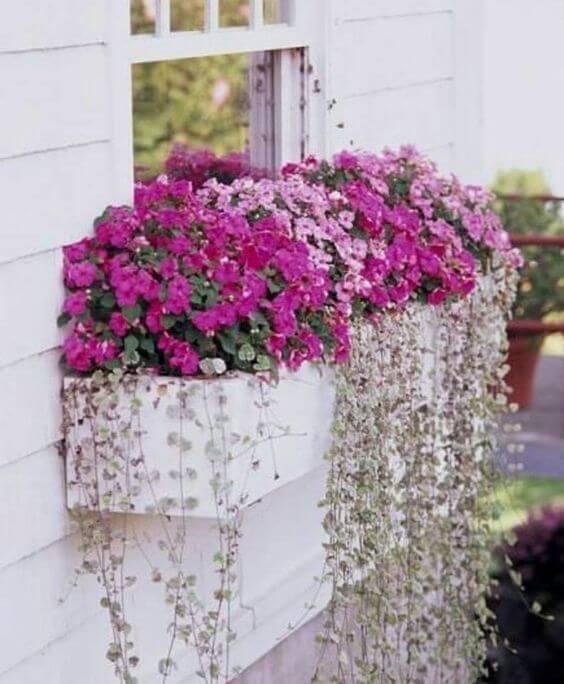 Flores cor de rosa na janela de casa