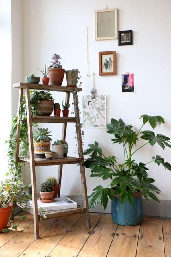 Decore sua casa com plantas lindas