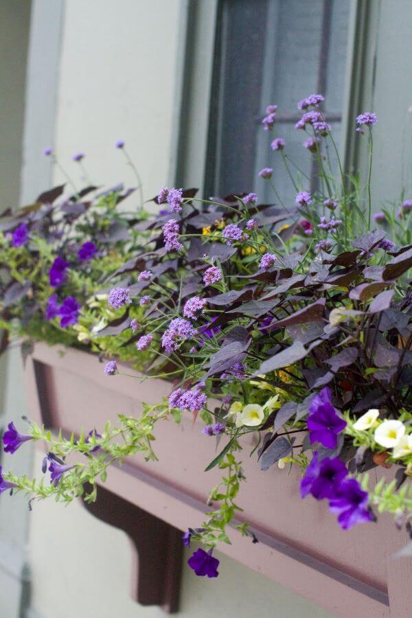 Floreira de janela com flores