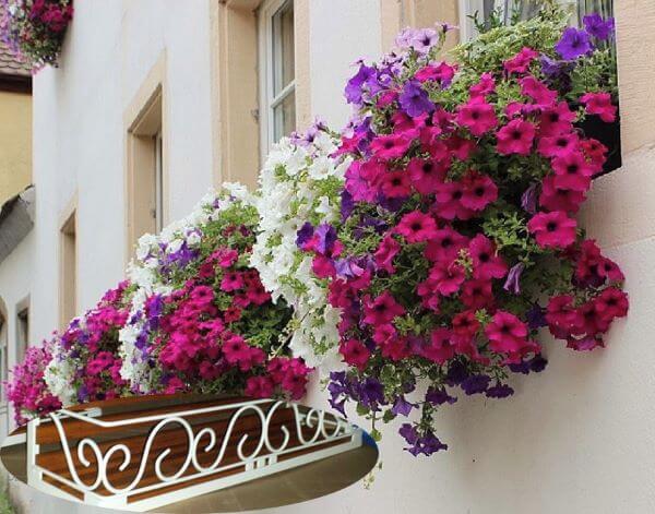 Floreias coloridas