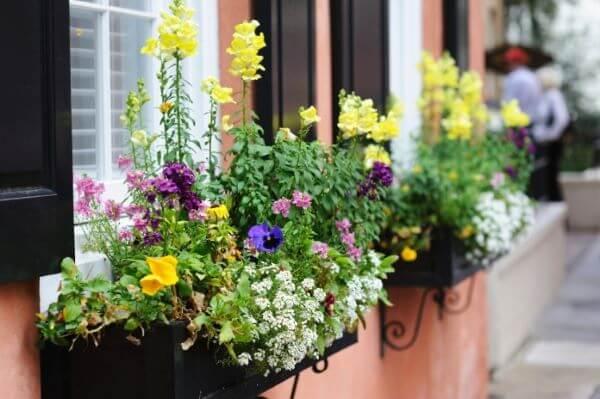 Floreiras de ferro com flores super coloridas