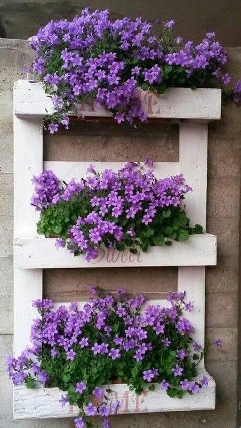 Floreira para violetas